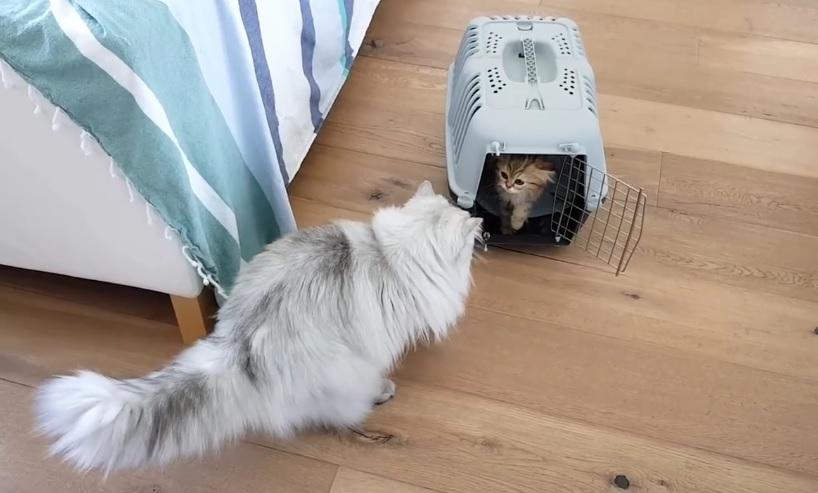 Milkshake Meets New Kitten Norah