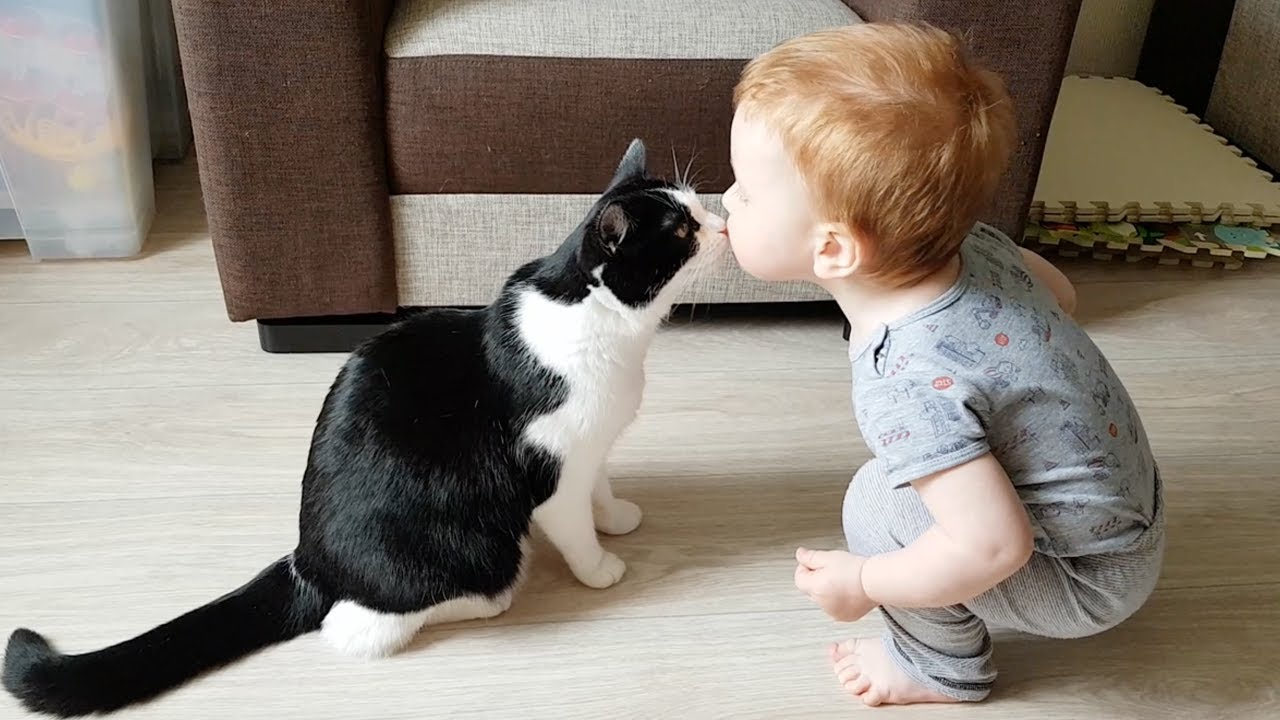 Little baby loves kitty