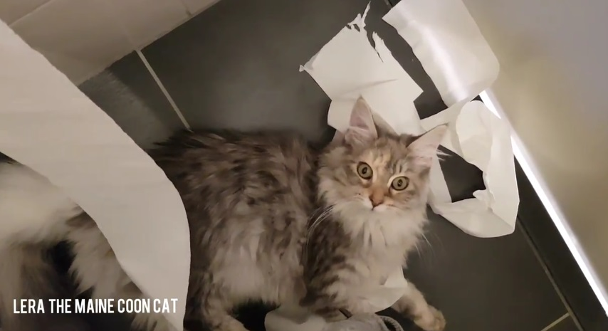 Lara Loves Toilet Paper