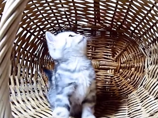 Cute Cat Loves Her Basket