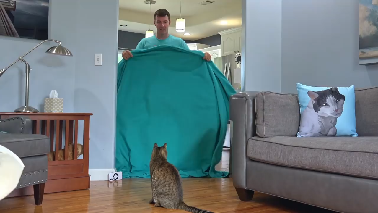 Mean kitty reacts to magic blanket trick