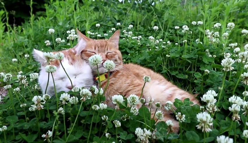 Relaxing In The White Clover Field
