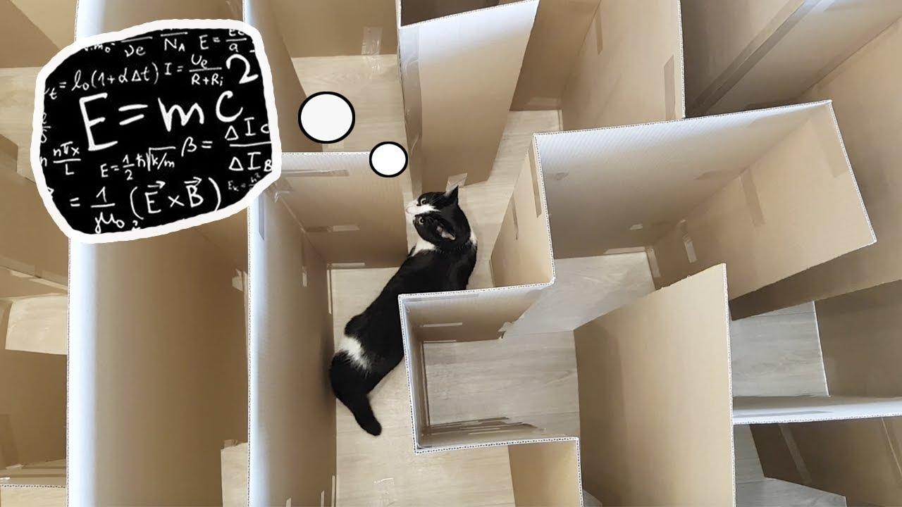 Pusic and the maze challenge