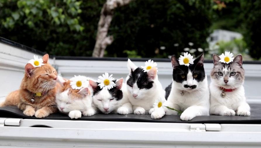Handsome Flower Cats