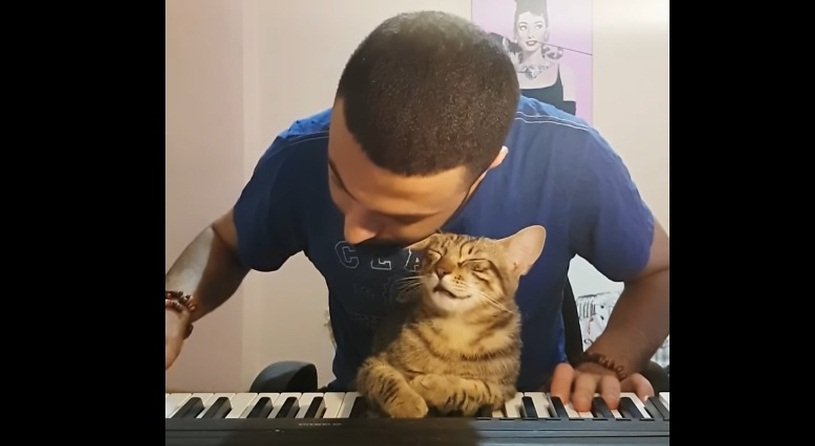 Cat Enjoys Piano Music