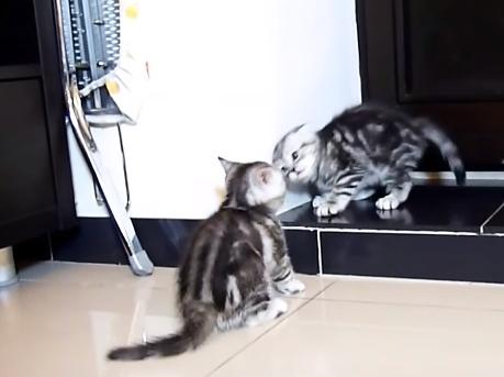 Kittens Fight Club