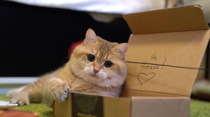 Hosico Loves His Meowbox