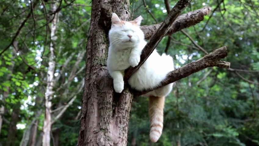 Shiro Hanging Out In Nature