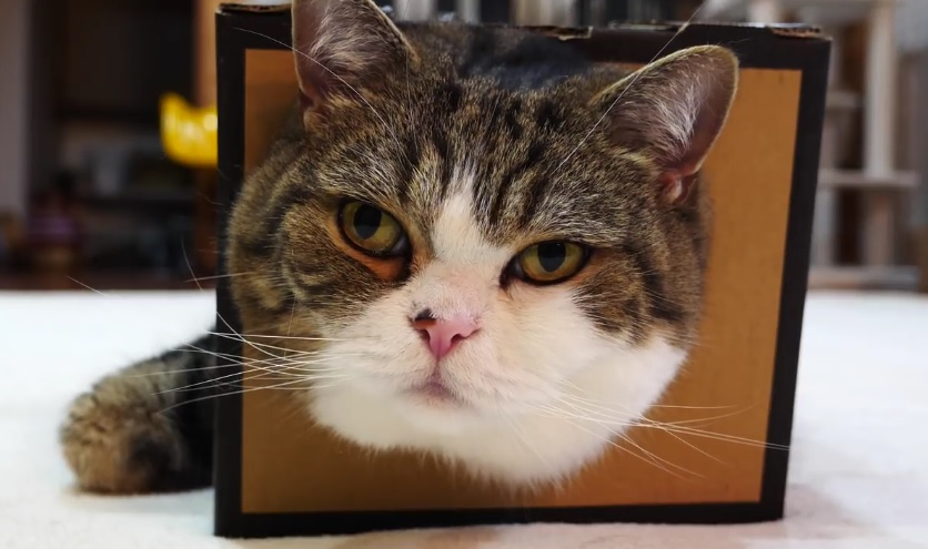 Maru's Fluffy Face