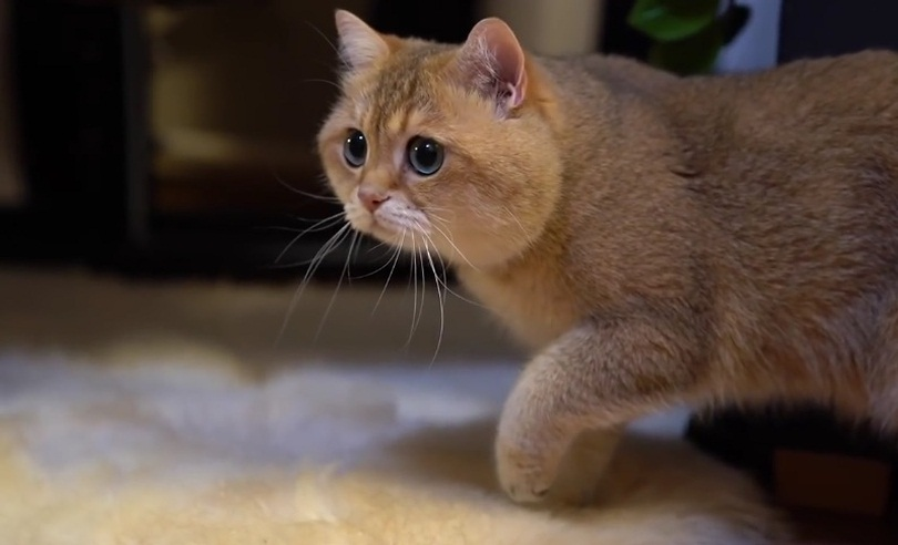 Hosico's What The Fluff Challenge