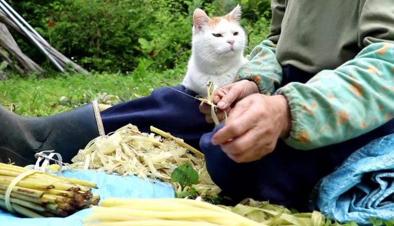 Shiro And His Farmer