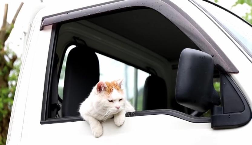 Shiro Relaxing In His Car