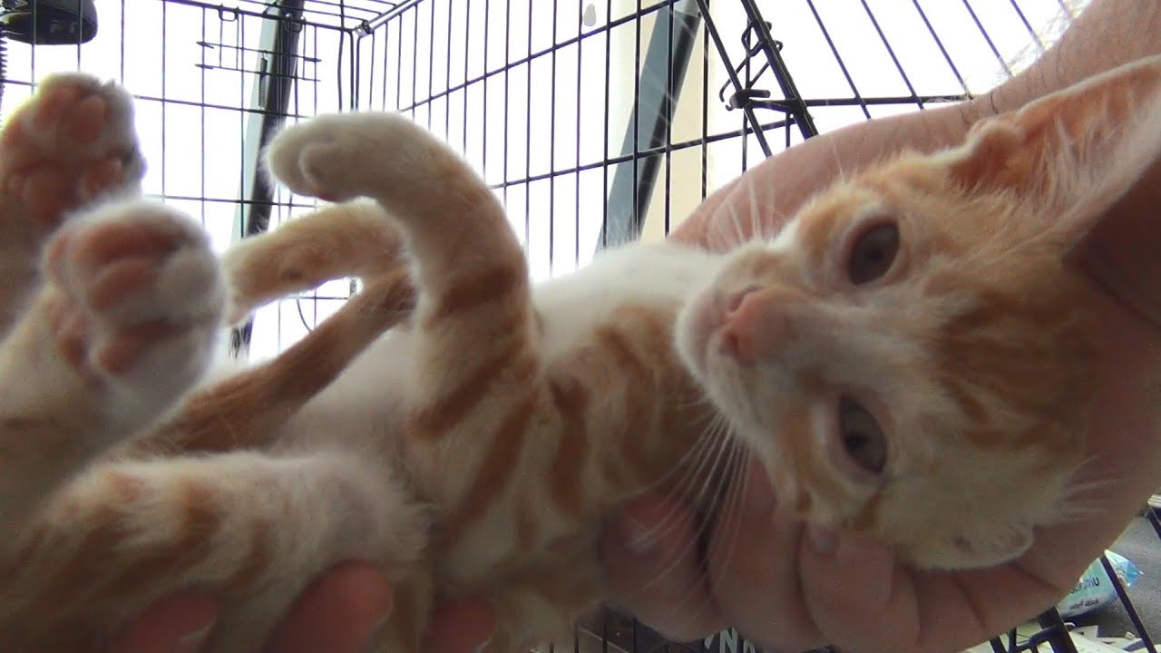 After getting his eyes treated this kitten becomes very playful