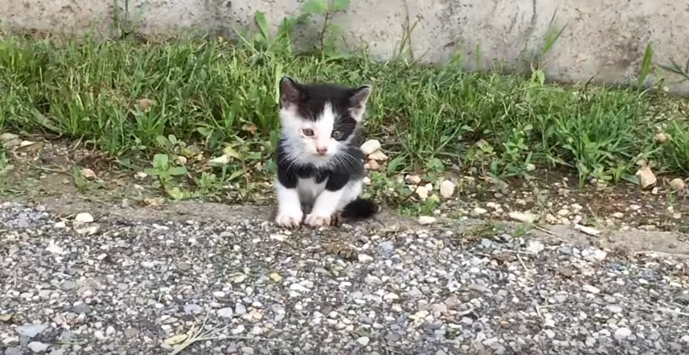 Abandoned Kitten Rescued From Street