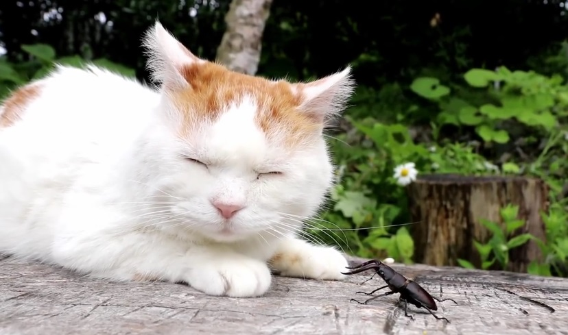 Shiro Chilling Out With A Beetle