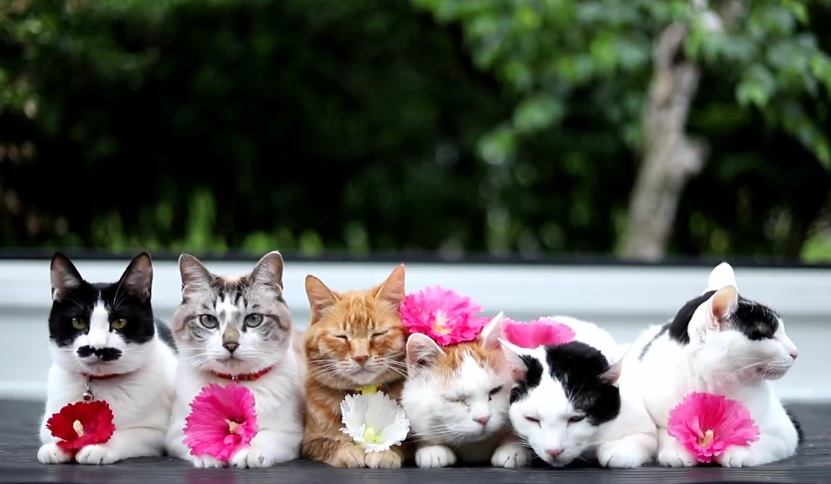 Cute Cats Sitting Outside