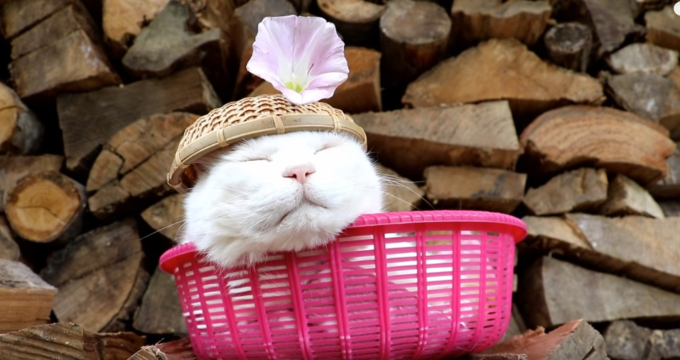 Shiro Relaxing In The Basket