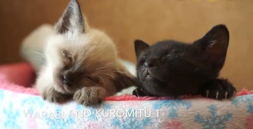 Warabi And Kuromitu Growing Up