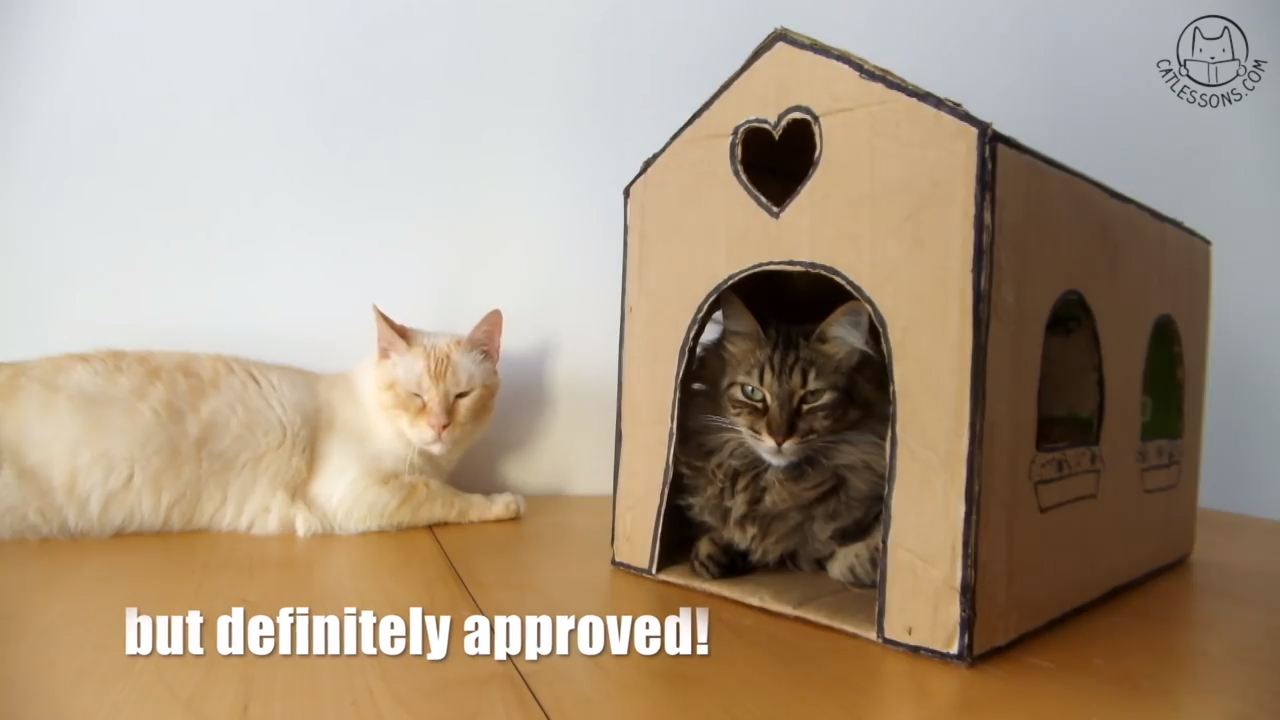 How to make a cat house from a simple box