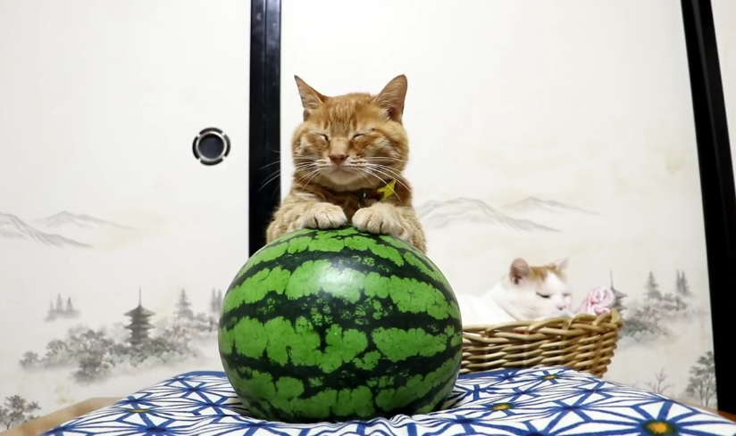 Guardians Of The Watermelon