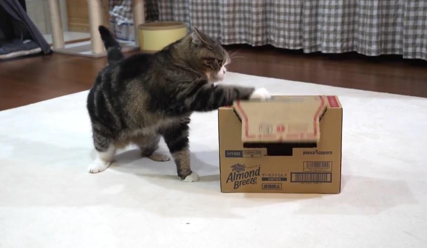 Maru Fails To Get Into The Box