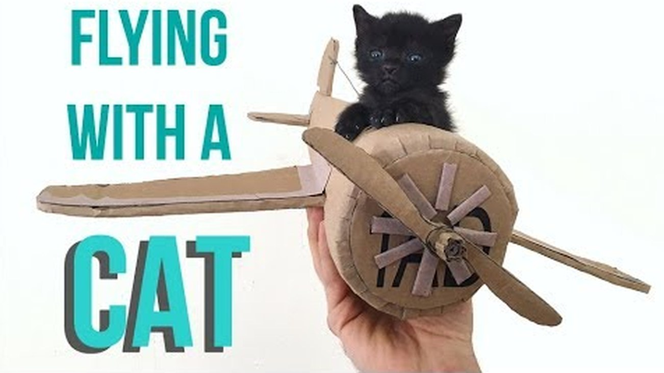 Some tips on how to fly with your cat