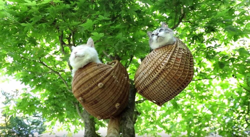 Cats Basking Outside