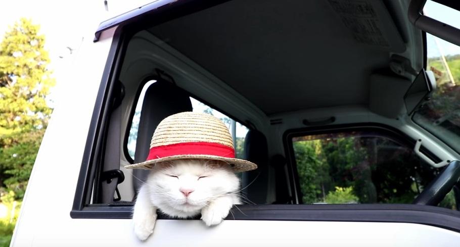 Shiro Relaxing In The Car