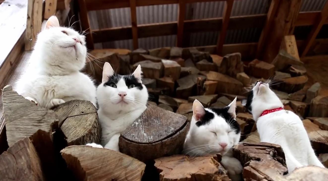 Beautiful Cats Relaxing
