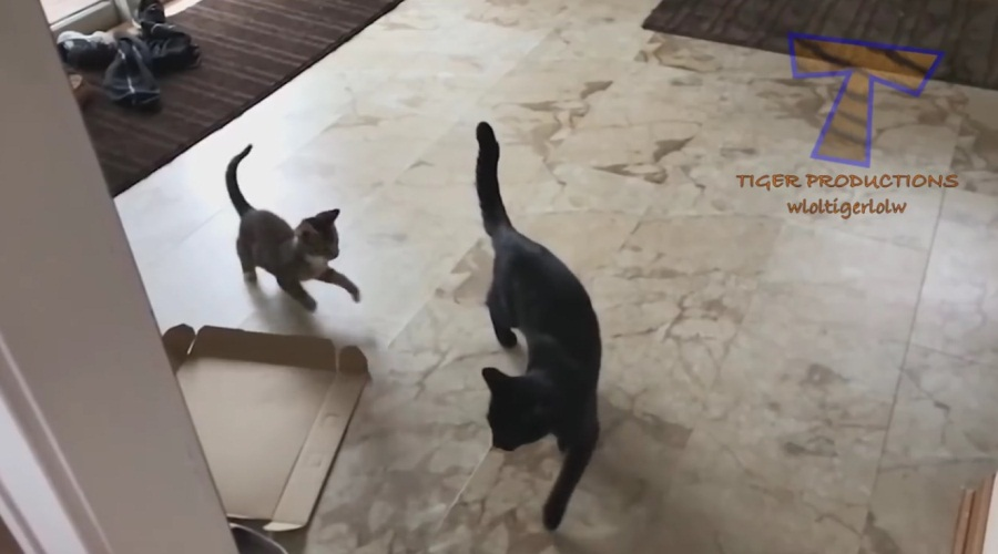 Ninja Cats - Funny Compilation