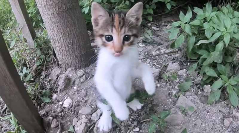 Kitten Learns To Climb Tree