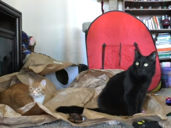 What Cats Do When Nobody Is Home