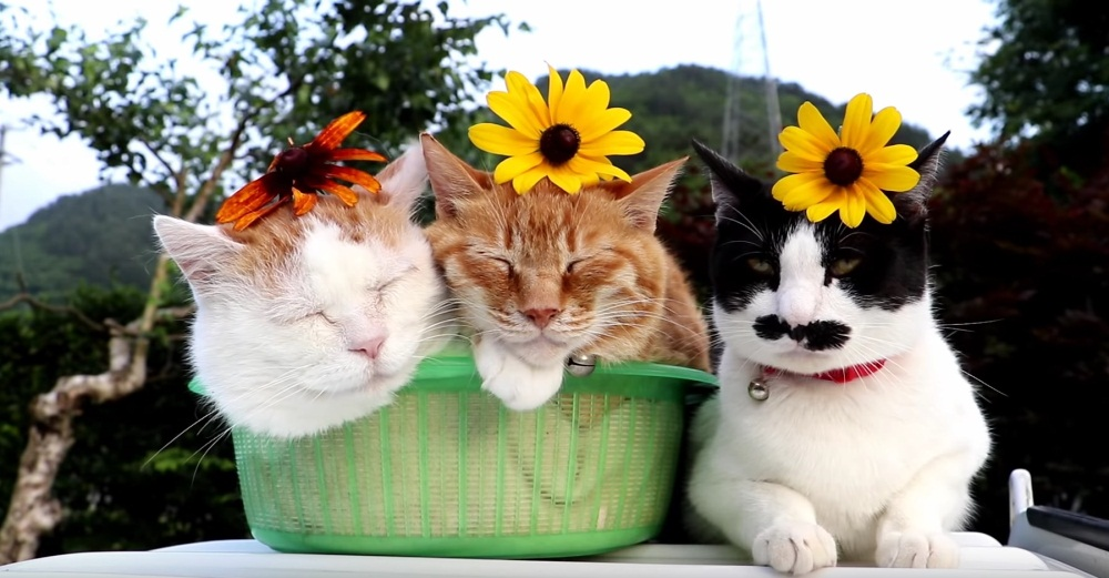 Three Beautiful Kitty's