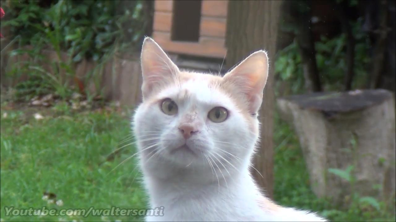 D'Artagnan, the staring cat
