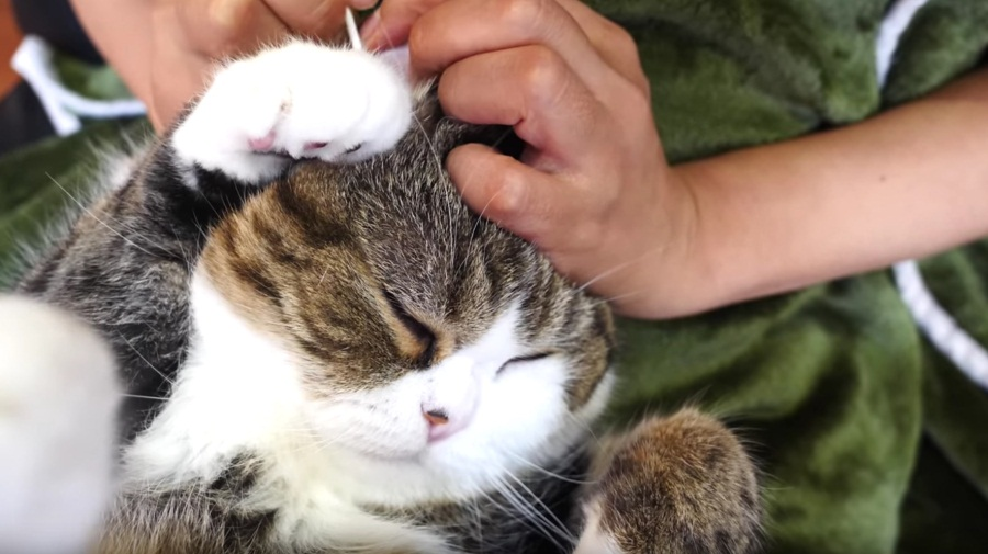 Maru Gets His Ears Cleaned