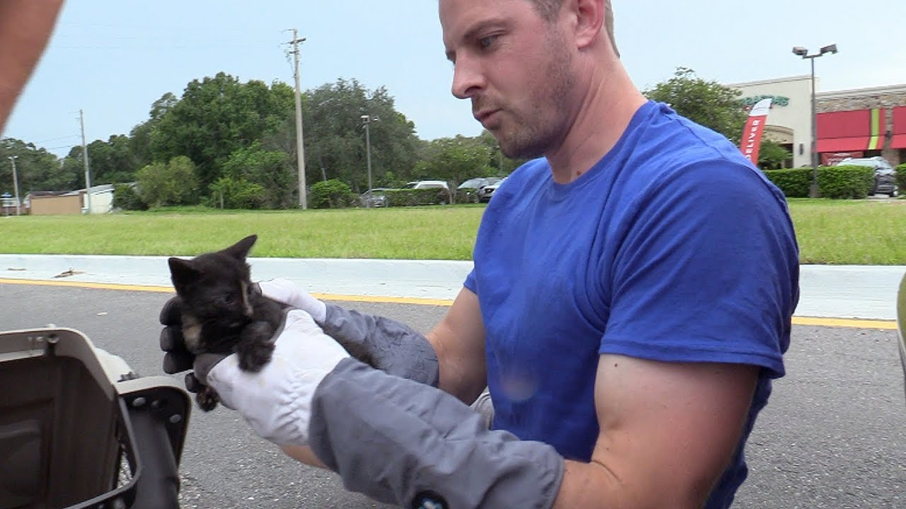 Tiny kitten rescued from underneath a car