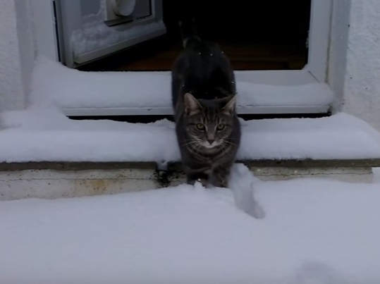 Cat Enjoys Playing In Snow
