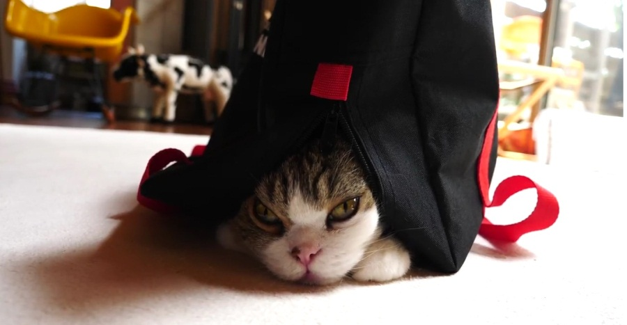 Maru Wears The Black Bag