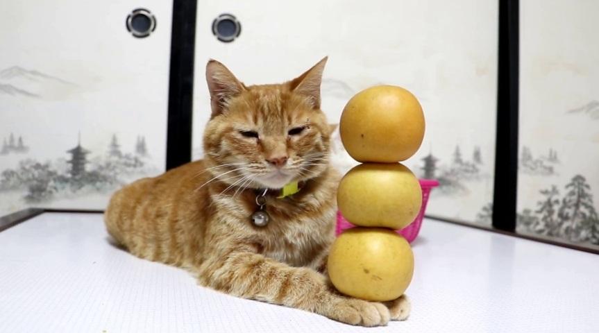 Tora's Balancing Act