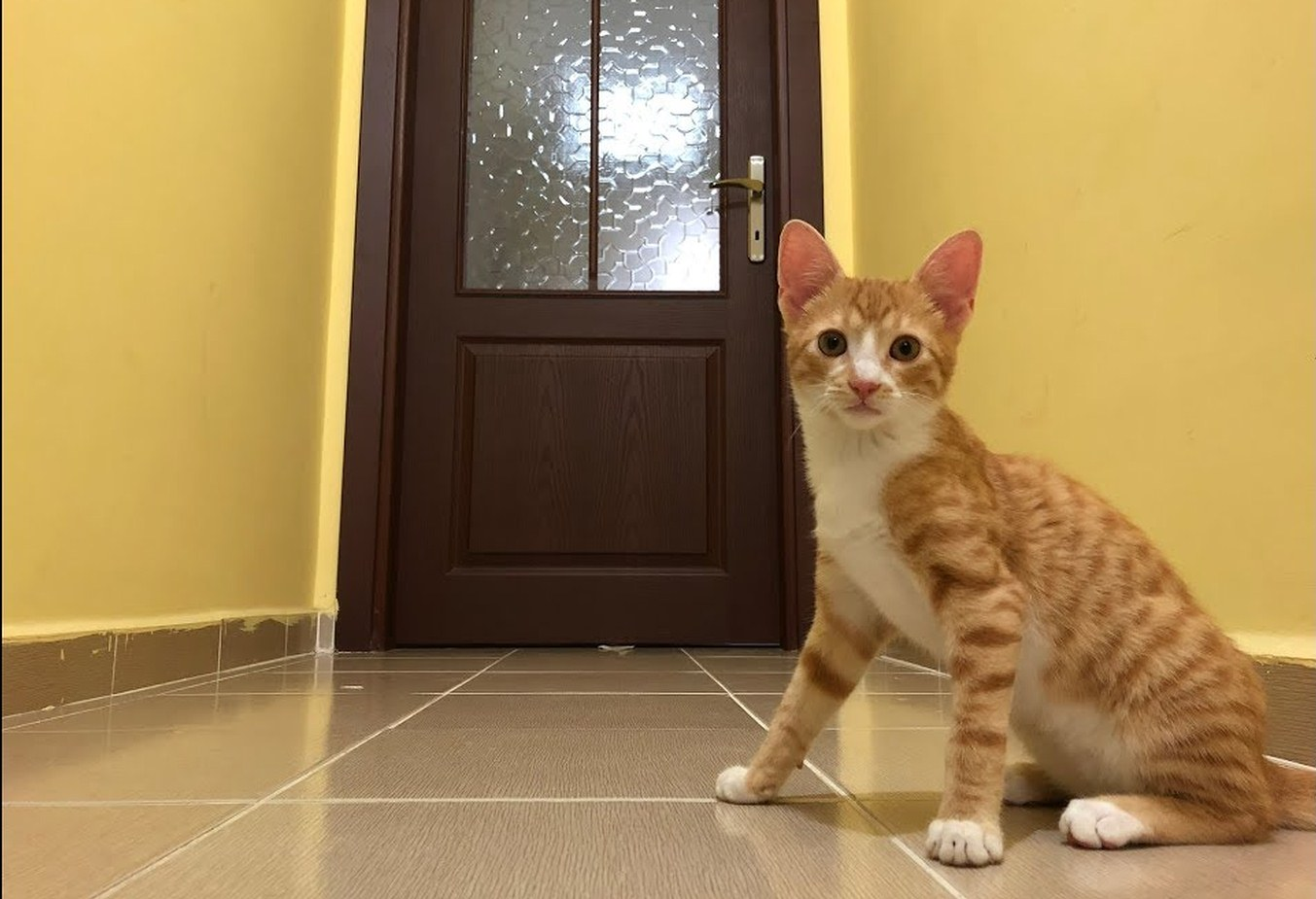 Ginger kitten and the mysterious door