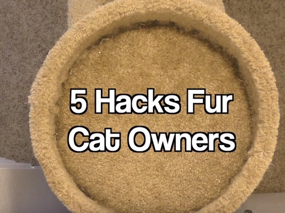 5 Hacks Fur Cat Owners