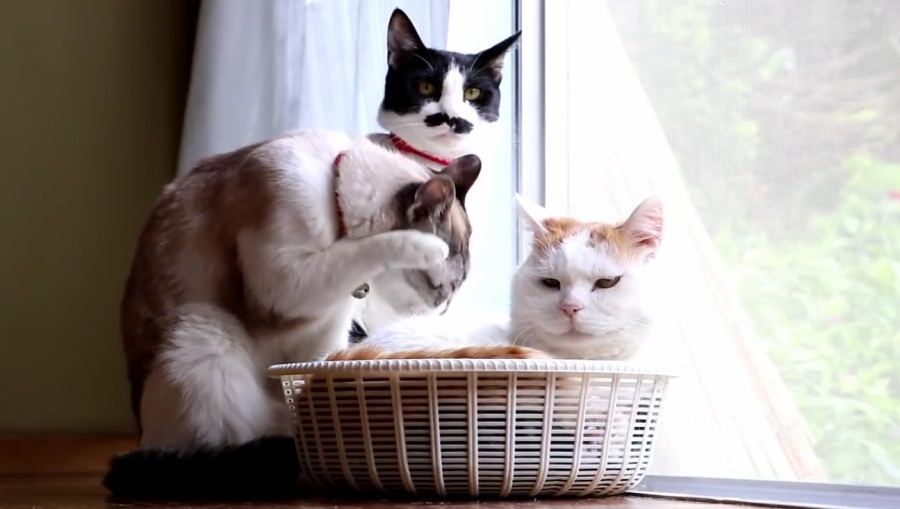 Cute Cats By The Window