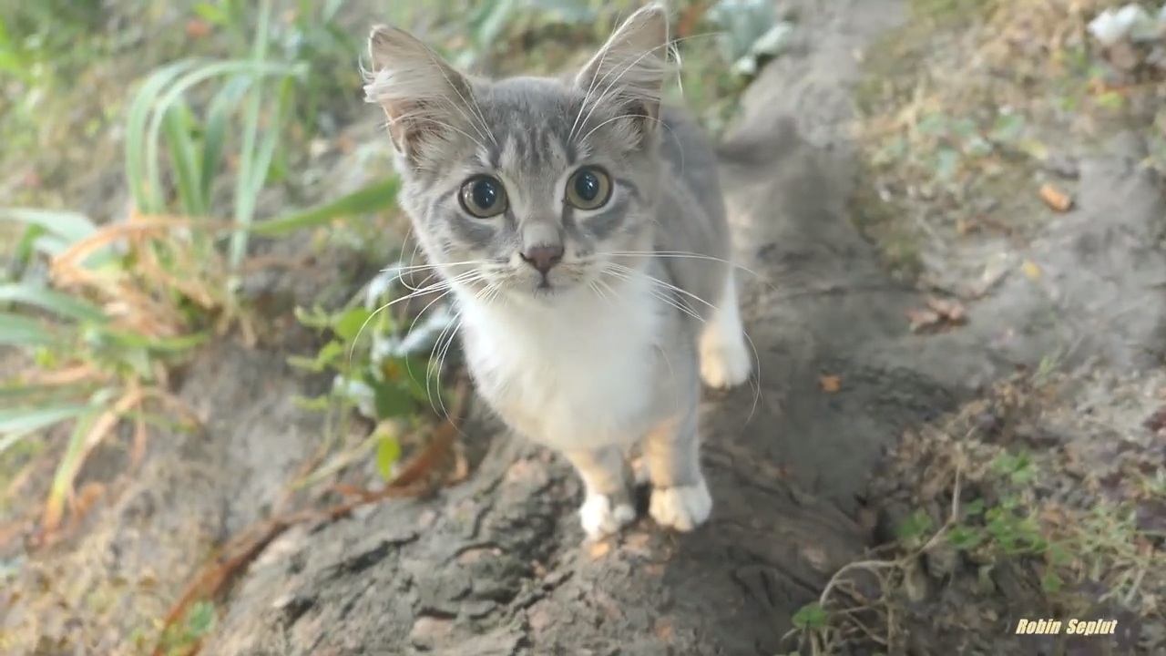 Stray cat and her cute kitten get some food from a compassionate hooman