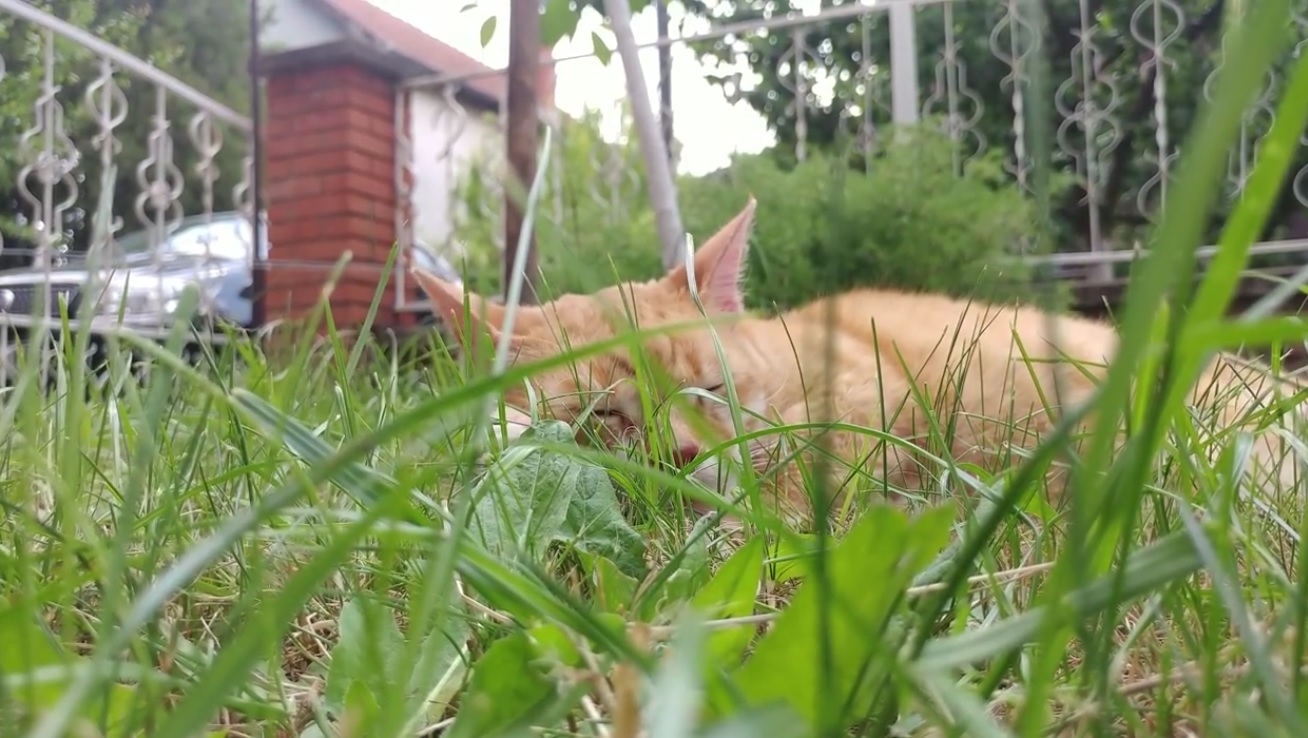 Gale Enjoying The Garden