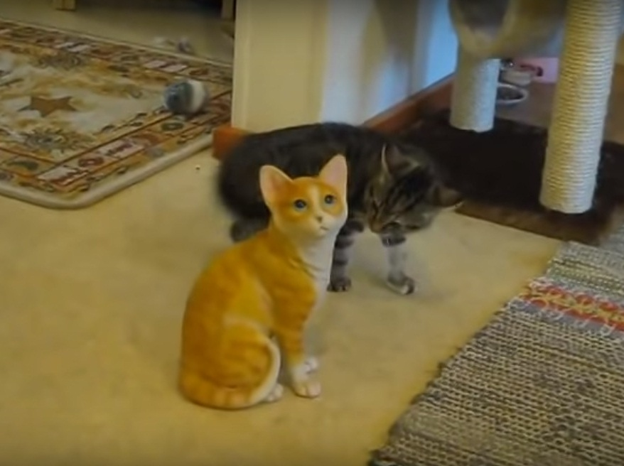 Kitten savagely attacks ceramic cat
