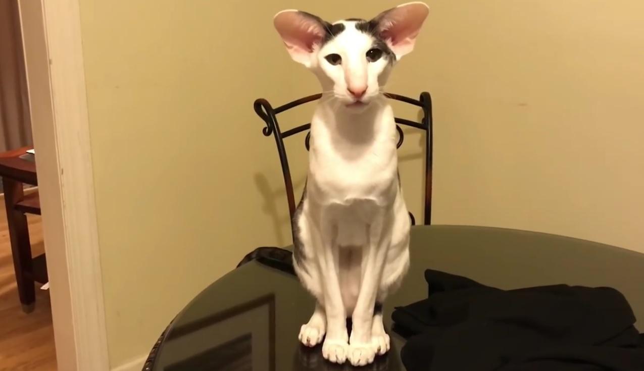 Teddy's Meow