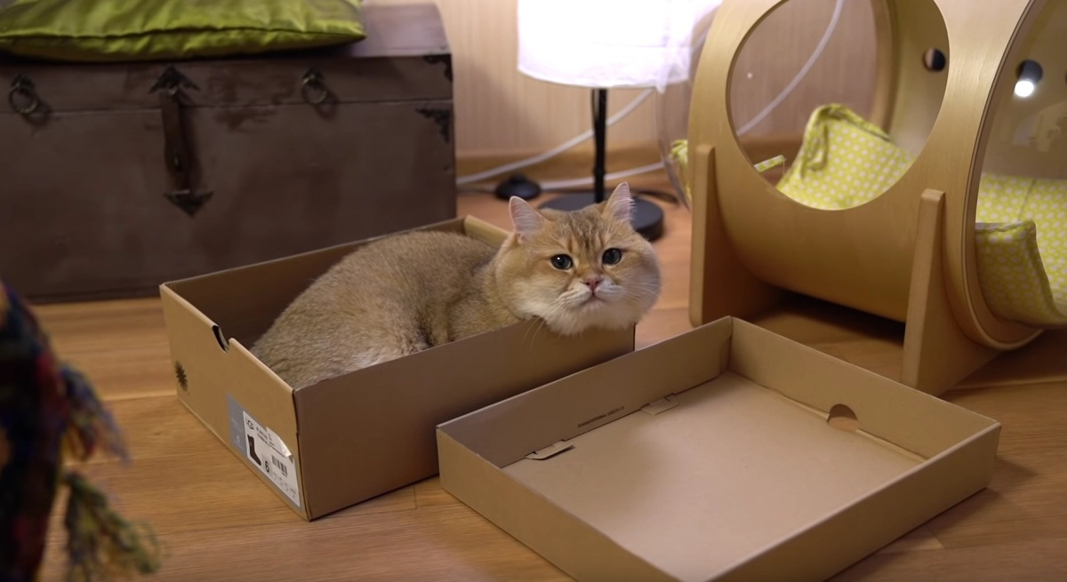 Hosico Gets Comfy In The Box