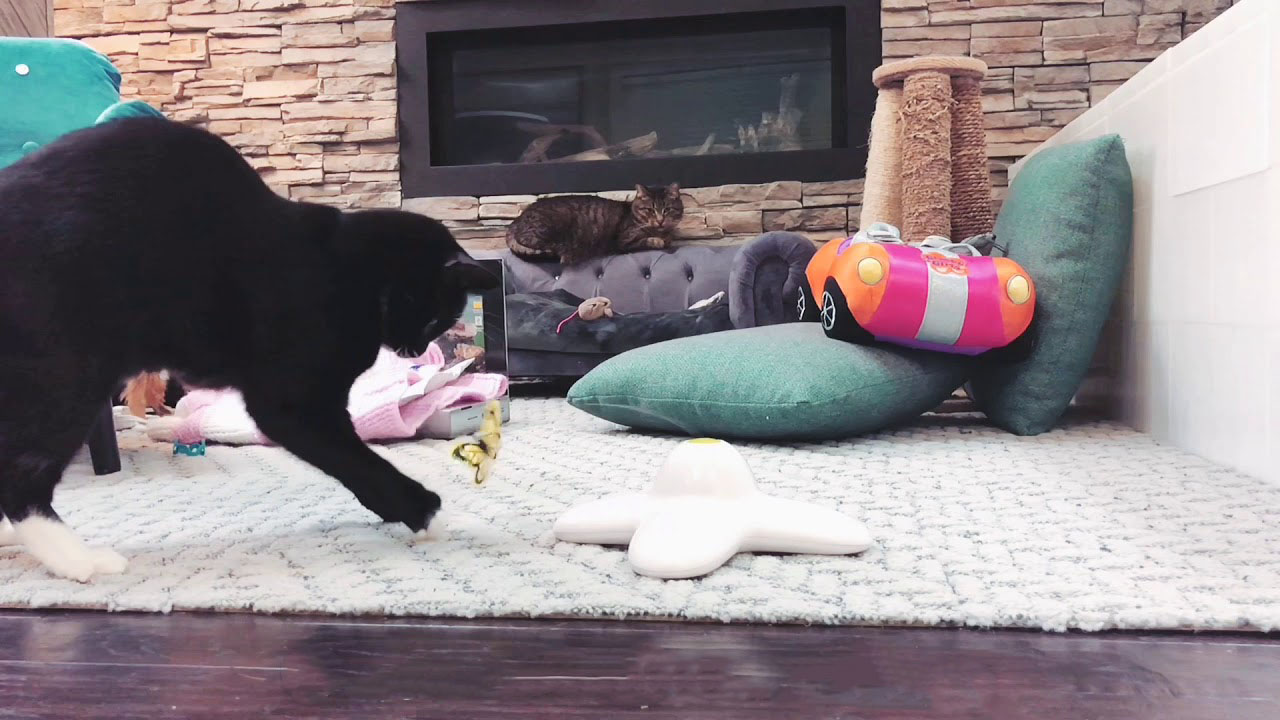 Black cat playing with a toy butterfly in slow motion