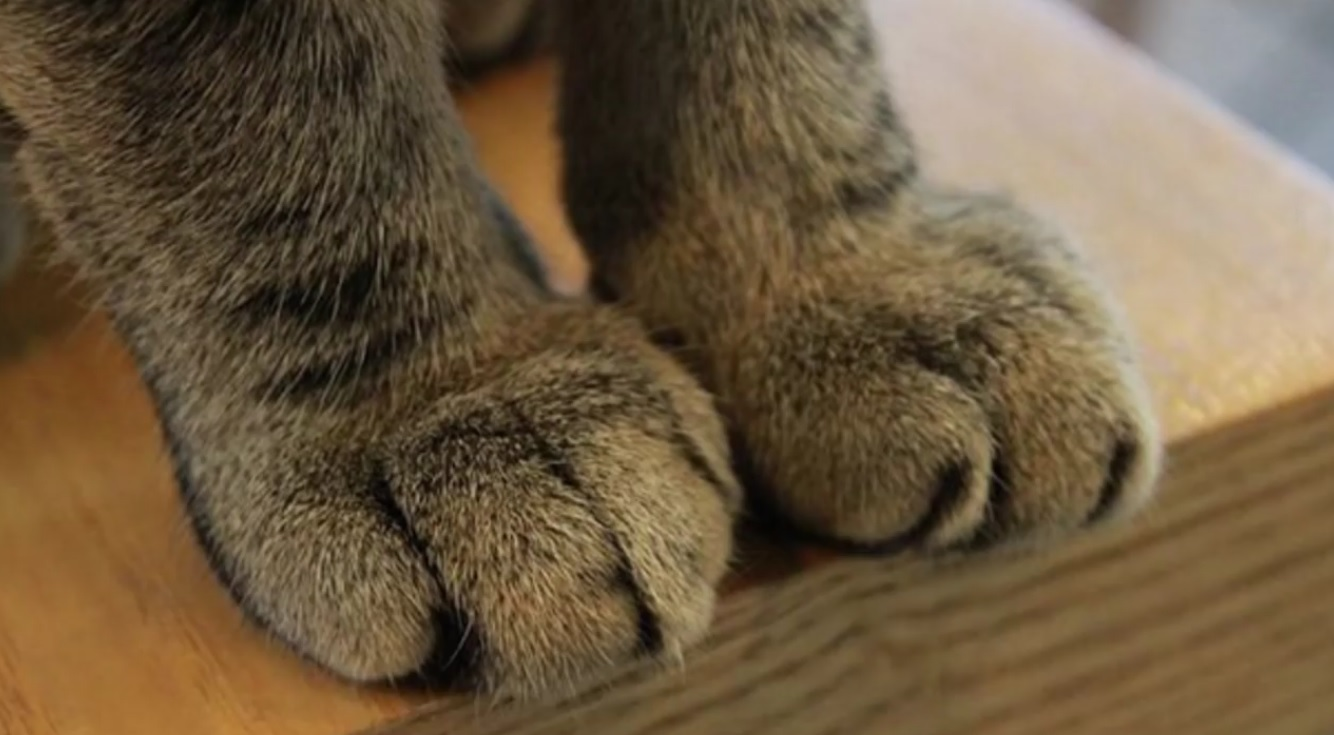 25 Pawsome Facts About Your Cat