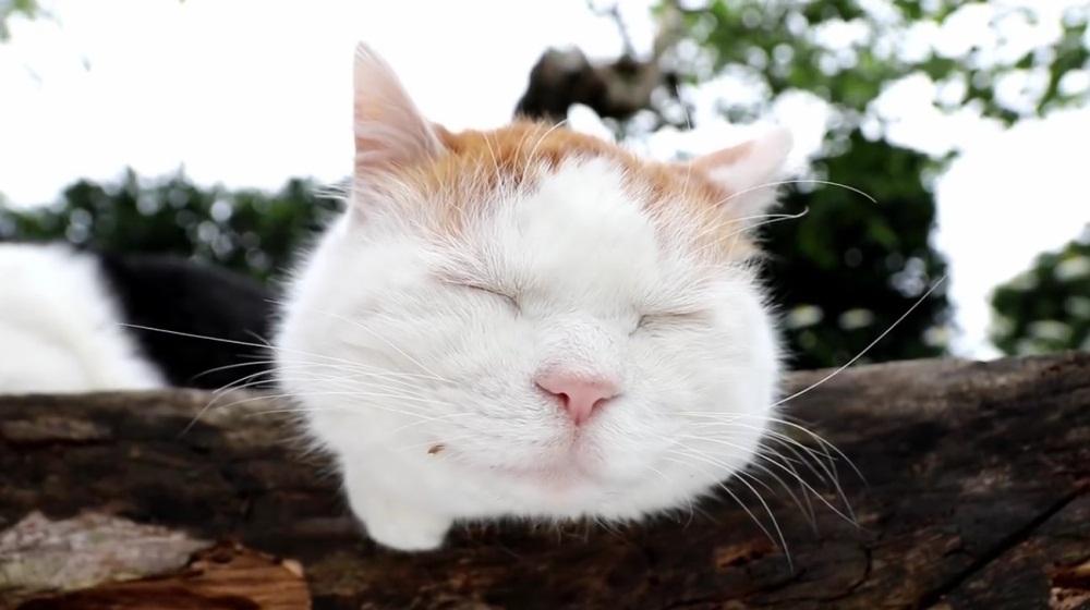 Peaceful Sunday With Shiro